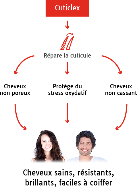 mode_d_action_schema_liperol_s_cutilex